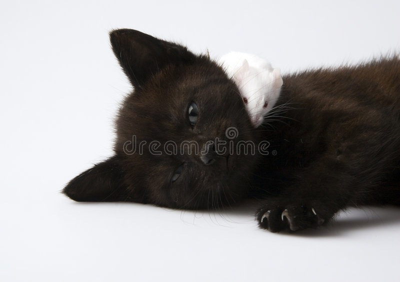 Cat & Mouse. Cat - the small furry animal with four legs and a tail; people often keep cats as pets royalty free stock photography