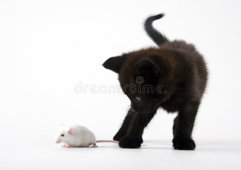 Cat & Mouse. Cat - the small furry animal with four legs and a tail; people often keep cats as pets stock photo