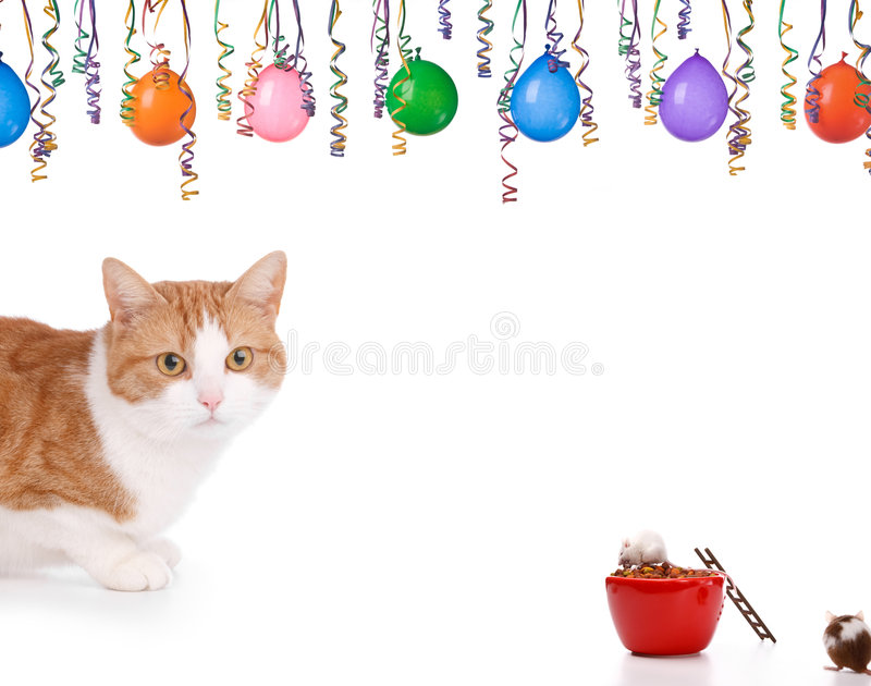 Download Cat and mouse stock photo. Image of mice, humor, conceptual - 7371094