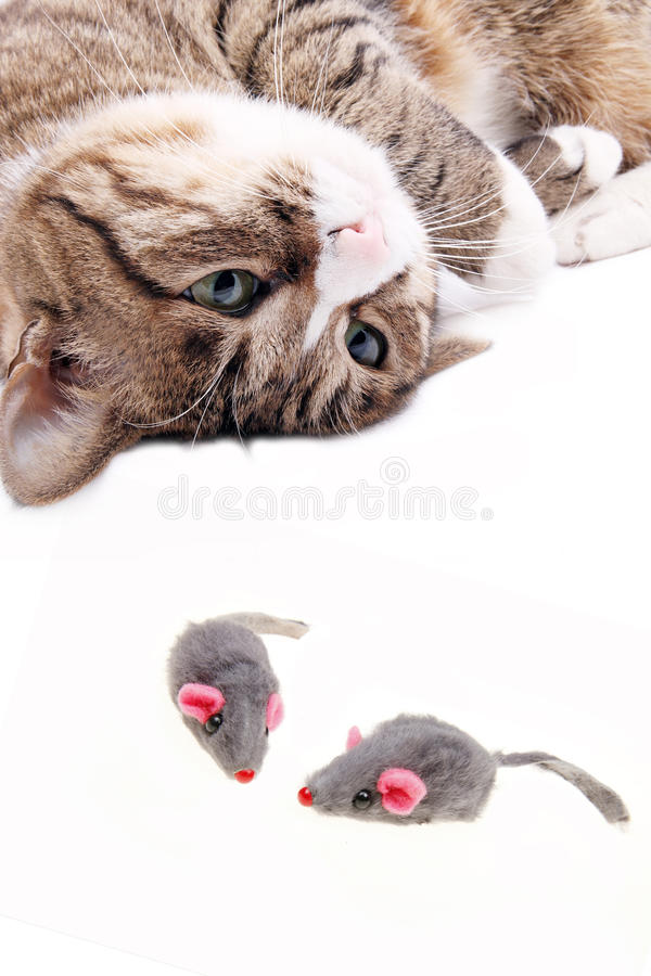 Cat with mouse toy stock photo