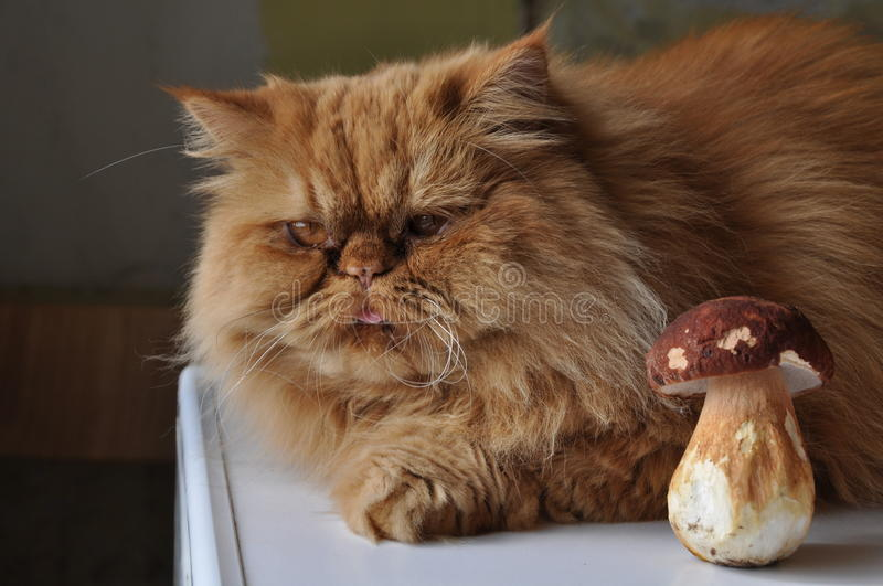 Download Cat And Mushroom Stock Photos - Image: 20994423
