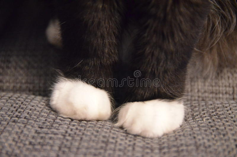 Cat. My favourite pads have a rest on a sofa royalty free stock photography