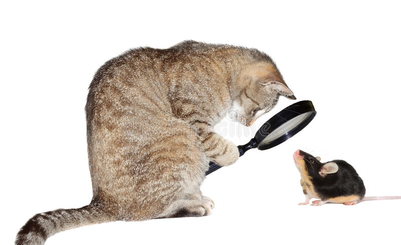 Cat with myopia. Humorous conceptual image of a nearsighted cat with myopia peering at a little mouse through a magnifying glass isolated on white royalty free stock photos