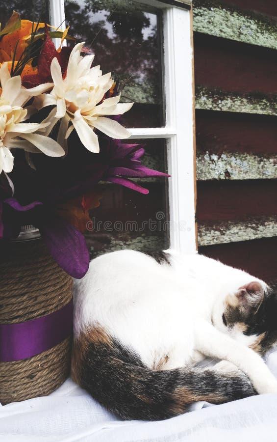 Cat Nap photographie stock