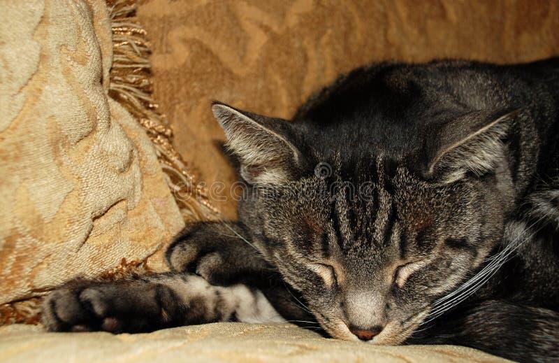 Cat Nap stock photo