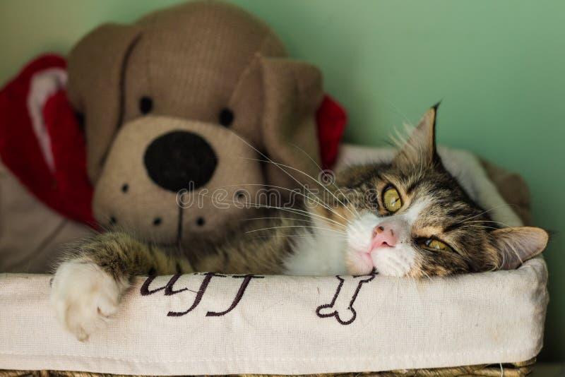Cat Nap fotografering för bildbyråer