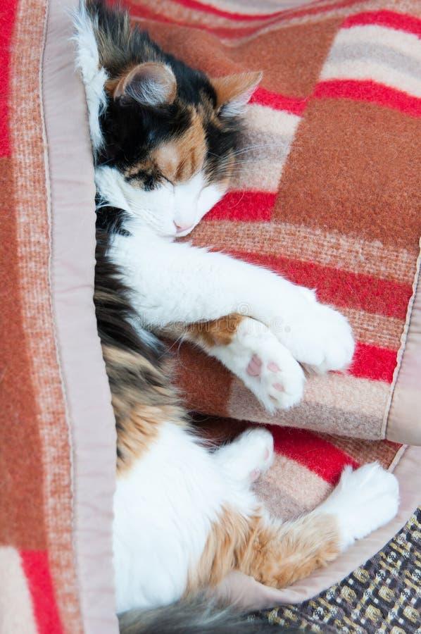 Cat Nap images stock