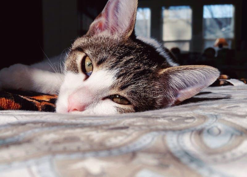 Cat Nap stock foto