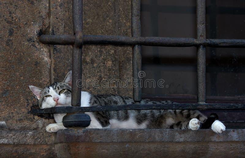 Cat Nap Nepi Italien arkivfoto