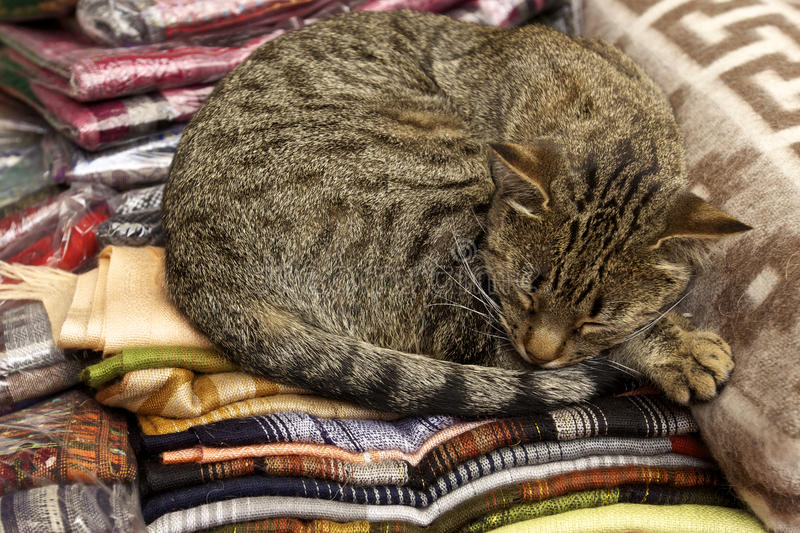 Download Cat nap stock image. Image of stray, whiskers, feline - 30805783