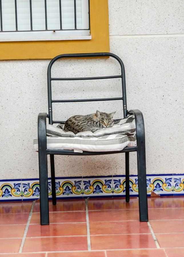 Cat Nap Time arkivbilder