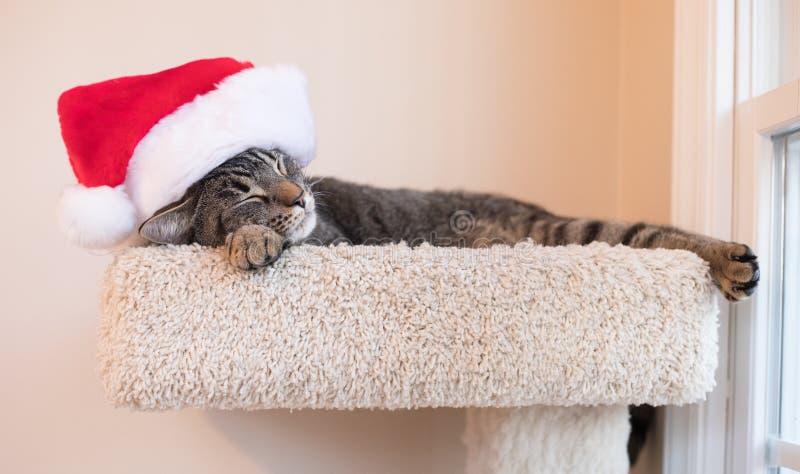 Cat Nap Time med en Santa Hat arkivbild