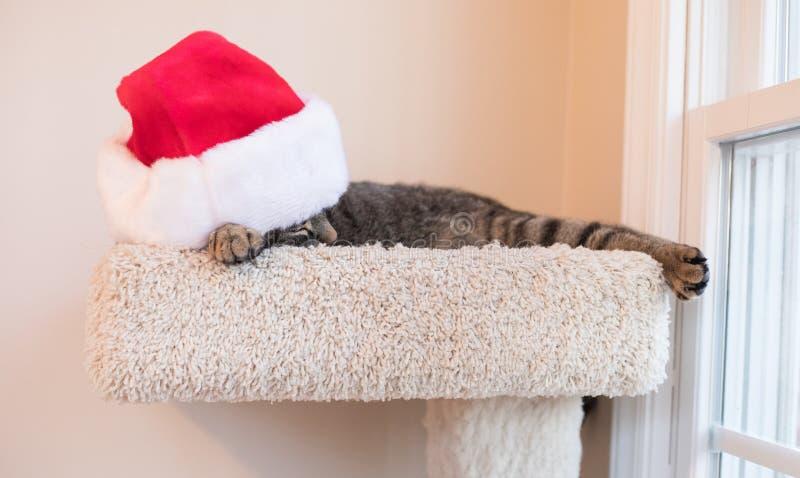 Cat Nap Time med en Santa Hat fotografering för bildbyråer