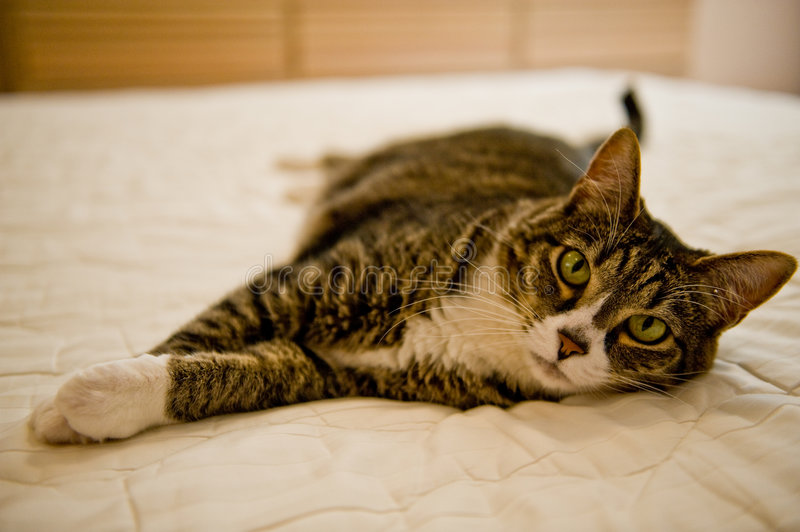 Download Cat Napping on the Bed stock image. Image of house, tabbie - 6049393