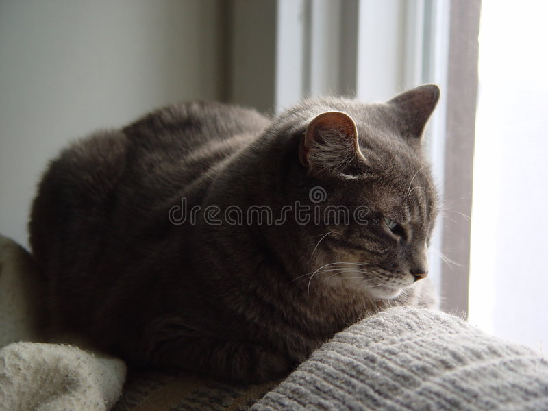 Cat Napping Near A Window Royalty Free Stock Image