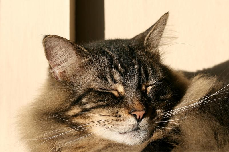 Download Cat napping in sun stock photo. Image of napping, cozy - 12284152