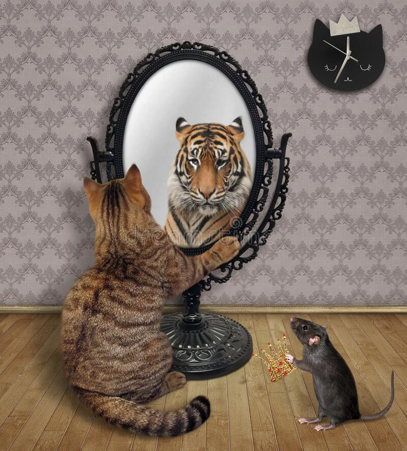 21+ Cat Mirror Lion  Wallpapers
