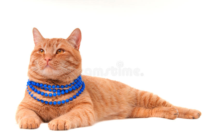 Download Cat with necklace stock photo. Image of blue, lovely - 17327902