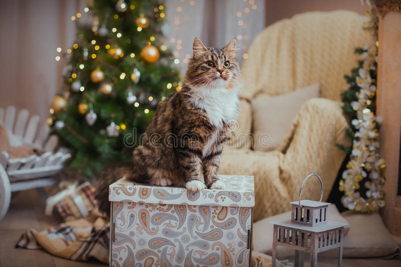 Cat, new year holidays, christmas, christmas tree royalty free stock images