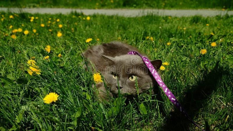 Cat Nice photo stock
