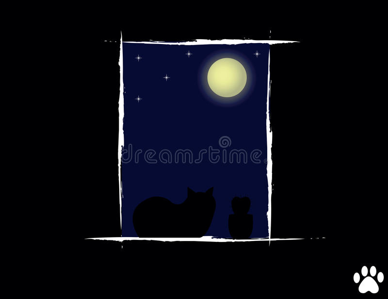 Cat In The Night Looking Stock Photos