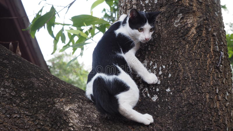 Cat Ninja royaltyfri fotografi