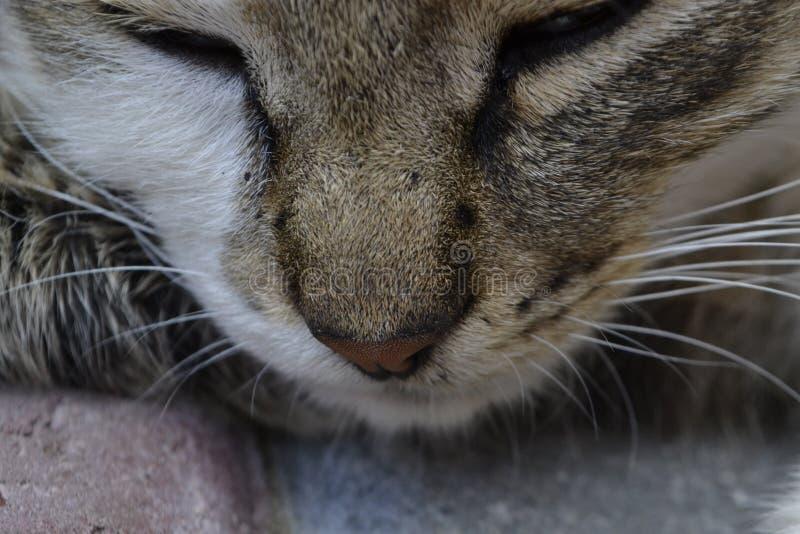 Cat nose. stock image
