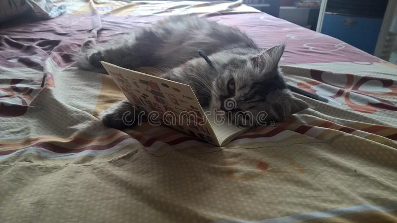 Cat and notebook stock photo