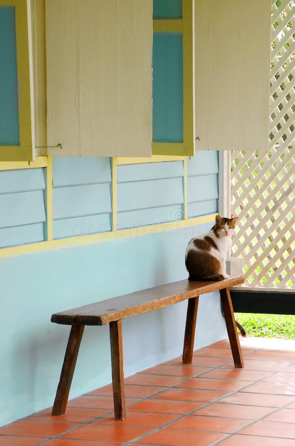 Cat, old wooden asian house stock photo