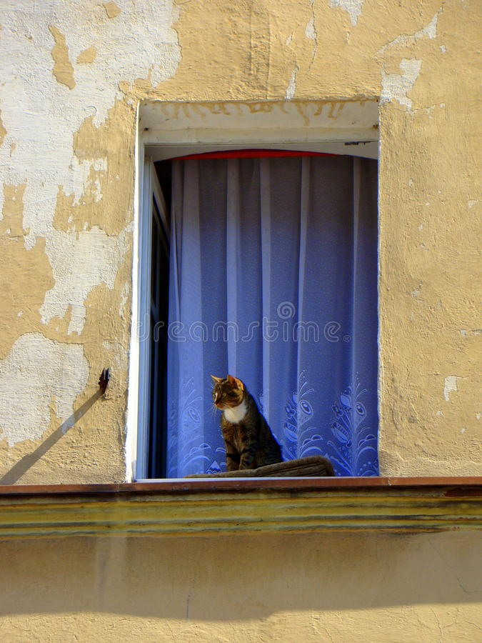 Cat and open window stock photos