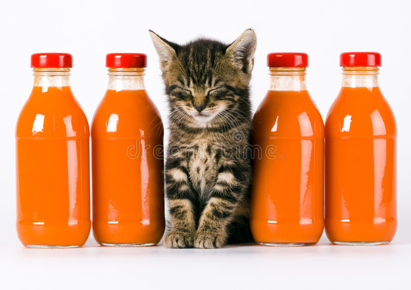 Cat & Orange drink. Cat - the small furry animal with four legs and a tail; people often keep cats as pets stock photography