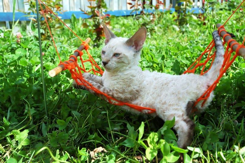 Download Cat in orange hammock stock image. Image of looking, curls - 468437