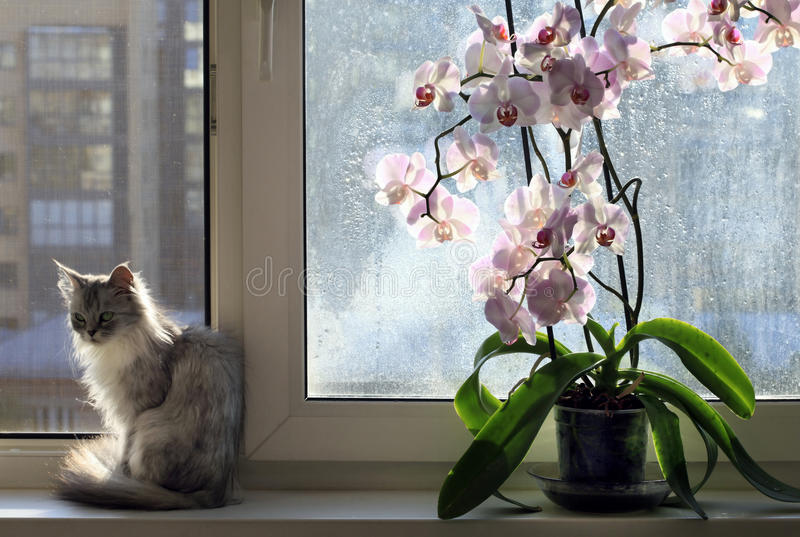 Cat and an orchid stock photography