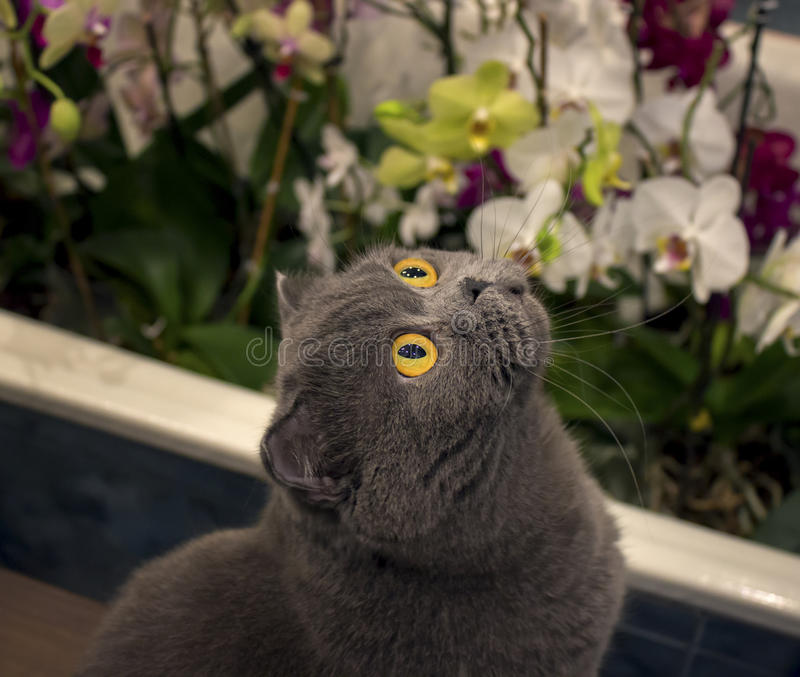 Cat in orchids. Cat with big orange eyes in orchids royalty free stock photography