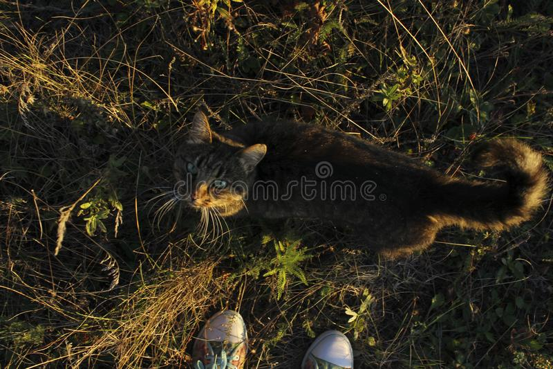 Cat Outdoors. Nature, Animals Concept. Autumn Background. Cat Outdoors. Nature, Animals Concept stock photo