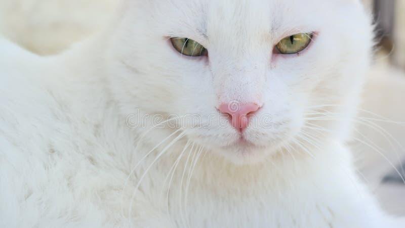 Cat Outside bianca immagini stock