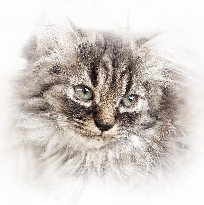 Cat in painting effect. Eye, focus, animal, pet stock photography