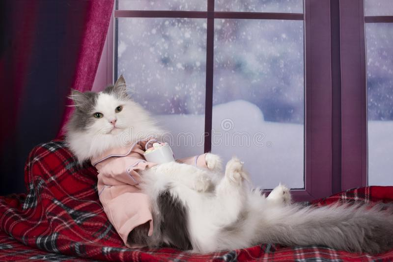 Cat in pajamas drinking hot cocoa with marshmallows.  stock photography
