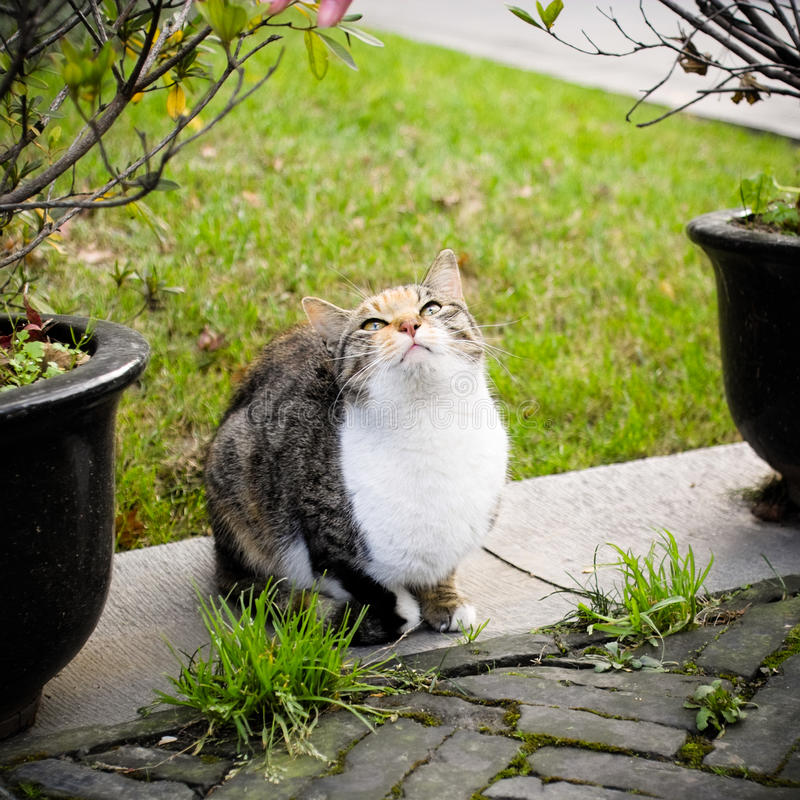 Download Cat in the park stock image. Image of curiosity, field - 12785197