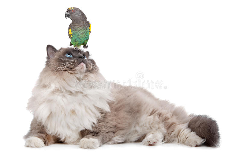 Download Cat And Parrot Royalty Free Stock Photos - Image: 23133238