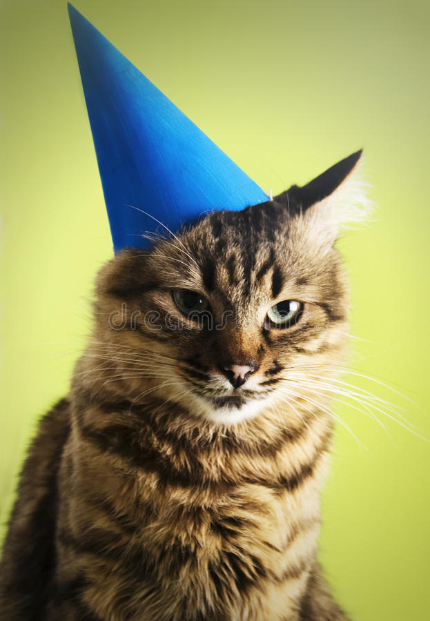 Cat with party hat. On a green background stock photo