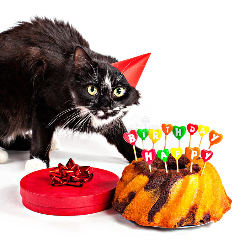 Cat With Party Hat And Birthday Gifts Stock Image