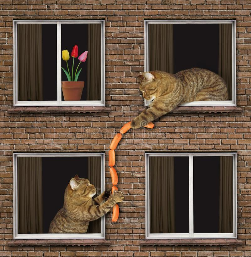 Cat treats neighbor with sausage royalty free stock images