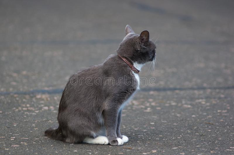 cat on the path of the city Park royalty free stock photo