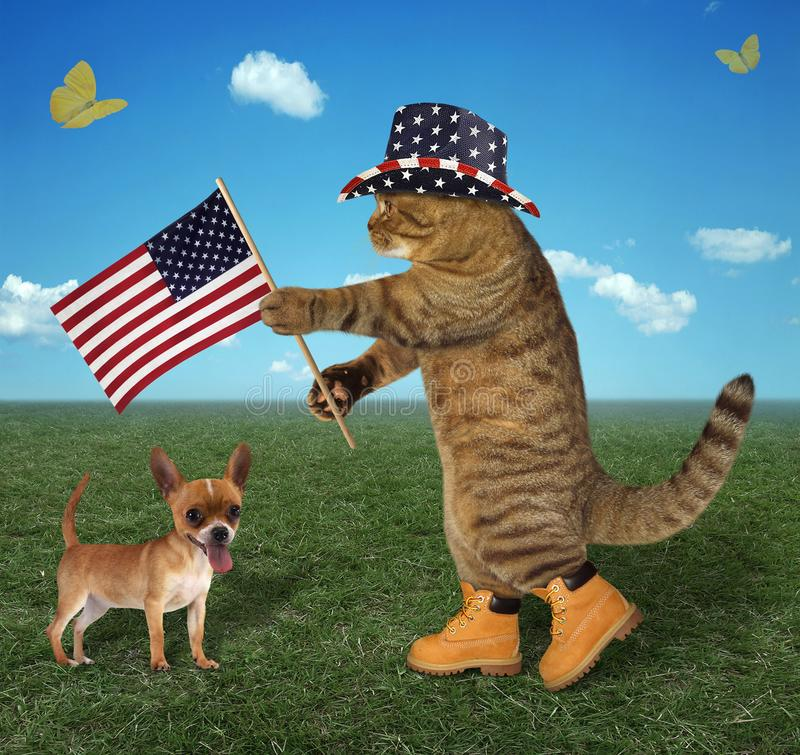 Cat with american flag and dog. The cat patriot in a hat holds the American flag. His dog is next to him stock photography