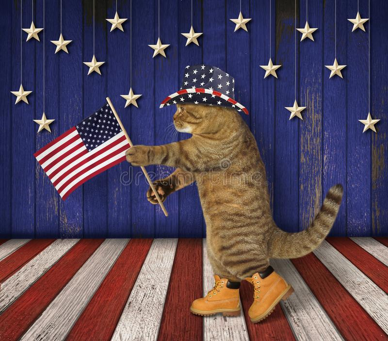 Cat patriot on stage royalty free stock images