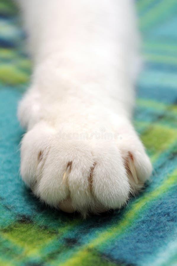 Cat Paw Stock Photos
