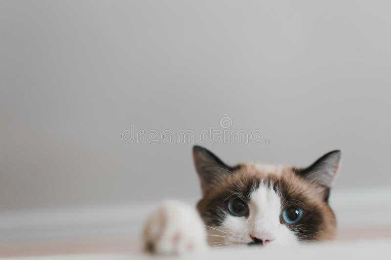 Cat Paw fotografia stock