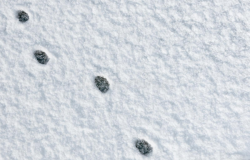 Download Cat Paw Footprints In The Snow Stock Photo - Image: 22617520