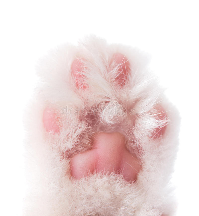 Download Cat Paw Isolated Royalty Free Stock Images - Image: 35211369